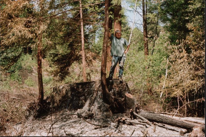 Willard-on-stump